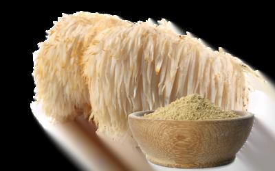 Lion's Mane Mushroom Powder 101