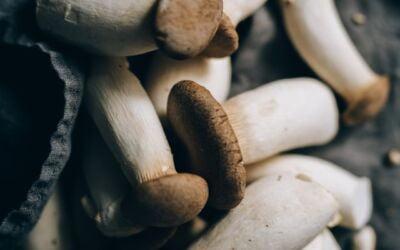 Benefits Of King Trumpet Mushrooms